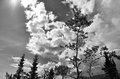 Trees and clouds yukon with sun in black white Stock Photography