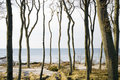 Trees by coastline Stock Photo