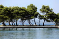 Trees on coastline Stock Photography