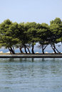 Trees on coastline Royalty Free Stock Photography