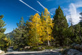 Trees in color fall with blue sky Stock Photos