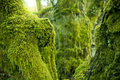 Trees Covered In Green Moss Royalty Free Stock Photos