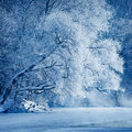 Trees covered with hoarfrost on the shores of an icy river Royalty Free Stock Photos