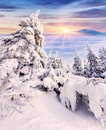 Trees covered with hoarfrost and snow in mountains foggy Royalty Free Stock Photos