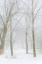 Trees covered with snow in the forest in thick fog Winter landsc Royalty Free Stock Photo