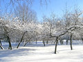 Trees covered with snow and ice cherry new in the garden in the park Royalty Free Stock Photography