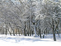 Trees covered with snow and ice wild under fresh in the park Stock Photos