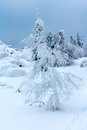 Trees covered with snow on a mountain top Royalty Free Stock Photo