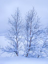 Trees covered with snow winter landscape birch Stock Image