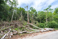 Trees cut down in the forest, deforestation or global warming concept, environmental issue