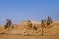 Trees in Desert Sahara oasis , Egypt Royalty Free Stock Photo