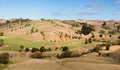 Trees on dry hills drought of in new zealnd left the land very looking Royalty Free Stock Photos