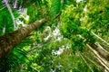 Trees In The El Yunque Rain Fo...