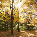 Trees in Fall color. Stock Photography
