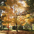Trees in Fall color. Stock Photos
