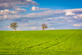 Trees in a farm field in rural york county pennsylvania Royalty Free Stock Photo