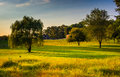 Trees in a field on a farm in rural Howard County, Maryland. Royalty Free Stock Photo