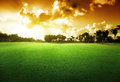 Trees on the field of grass and sunset Royalty Free Stock Image