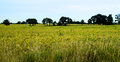 Trees in field row of on the horizon of green Royalty Free Stock Photography