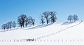 Trees field winter Royalty Free Stock Images