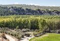 Trees fields in the spanish province of granada with and olive in a sunny day Stock Photo