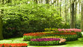 Trees and flowers in spring Stock Photography