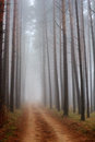 Trees in fog in forest Royalty Free Stock Photo