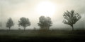 Trees in the fog sorrowful picture of october Royalty Free Stock Images