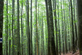Trees in a forest Stock Photos