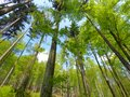 Trees in forest perspective view Stock Photography