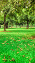 Trees and grass a large tracts of forest Stock Photography