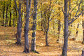 Trees with green and yellow leaves Royalty Free Stock Photo