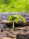 Trees are grown on soil and bark the Royalty Free Stock Image