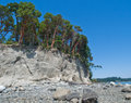Trees on high bluff above pebble beach and bay Stock Images