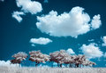 Trees on the hill and cumulus clouds infrared ir landscape Royalty Free Stock Image