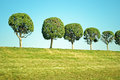 Trees on the hill in peterhof russia Royalty Free Stock Image