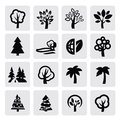 Trees icon Royalty Free Stock Photography