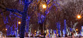 Trees illuminated to christmas and new year holidays at night in moscow russia Stock Images