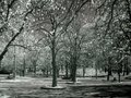 Trees in IR - infrared Royalty Free Stock Photo