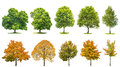 Trees isolated white background Oak maple linden birch Royalty Free Stock Photo