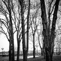 Trees in kiev ukraine monochromic Royalty Free Stock Image