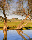 Trees and lake marin county california bare in winter reflect in the water of a small amid the rolling green hills of in northern Stock Images