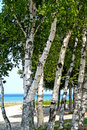 Trees on Lake shore Royalty Free Stock Photography