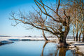 Trees in a lake in winter with blue sky and snow Royalty Free Stock Photos