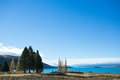 Trees at lakeside of the lake tekapo viewpoint has a beautiful sight lawn and distinctive blue water benches are placed in various Royalty Free Stock Images