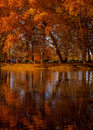 Trees and leaves european native forests in autumn collors Royalty Free Stock Photos
