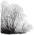 Trees without leaves landscape with bare are hand drawing at vector by tablet Stock Images