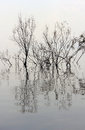 Trees without leaves reflected in the water of lake kinneret israel Royalty Free Stock Photo