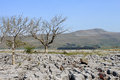 Trees, limestone pavement and Whernside Yorkshire Royalty Free Stock Image