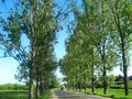 Road with trees lined up Royalty Free Stock Photo